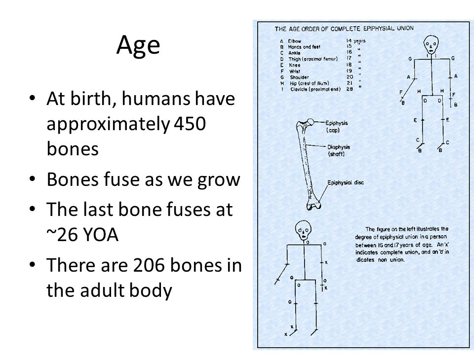 Age At birth, humans have approximately 450 bones