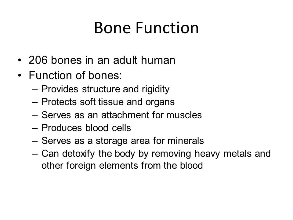Bone Function 206 bones in an adult human Function of bones: