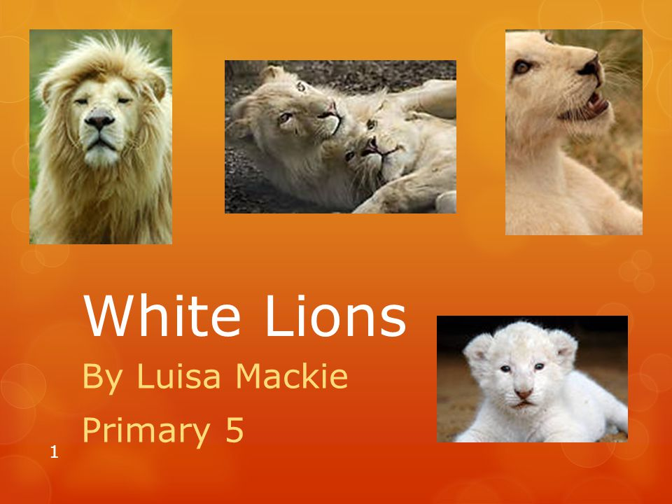 By Luisa Mackie Primary 5