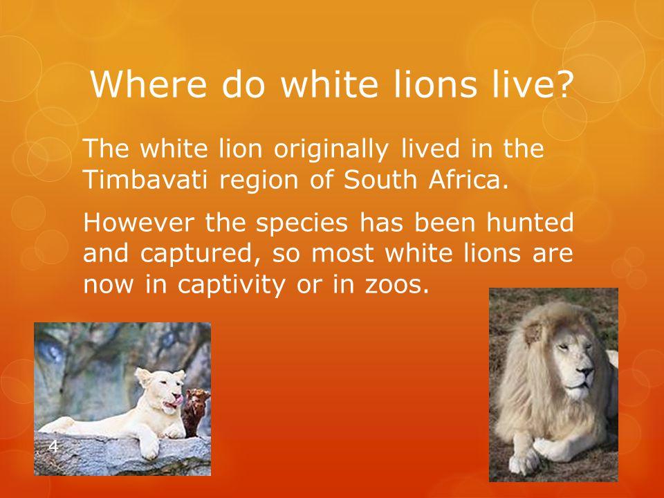 Where do white lions live