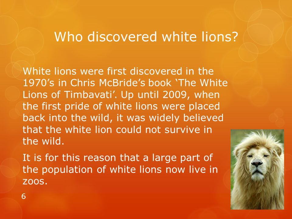 Who discovered white lions