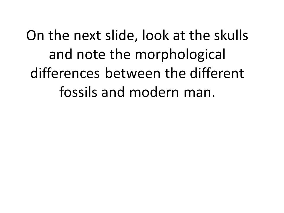 On the next slide, look at the skulls and note the morphological differences between the different fossils and modern man.