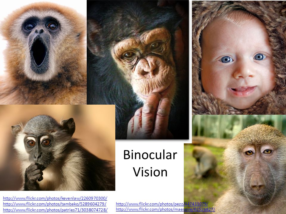 Binocular Vision http://www.flickr.com/photos/kevenlaw/2260970300/