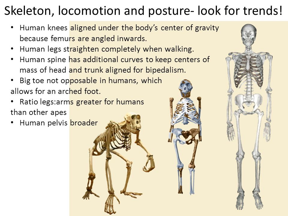 Skeleton, locomotion and posture- look for trends!