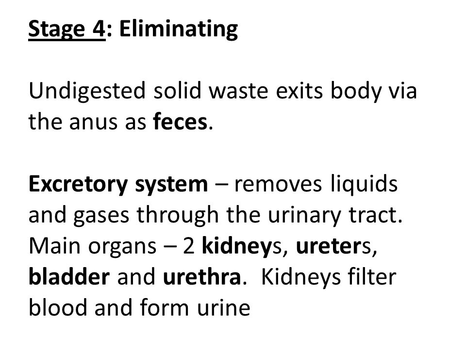 Stage 4: Eliminating Undigested solid waste exits body via the anus as feces.