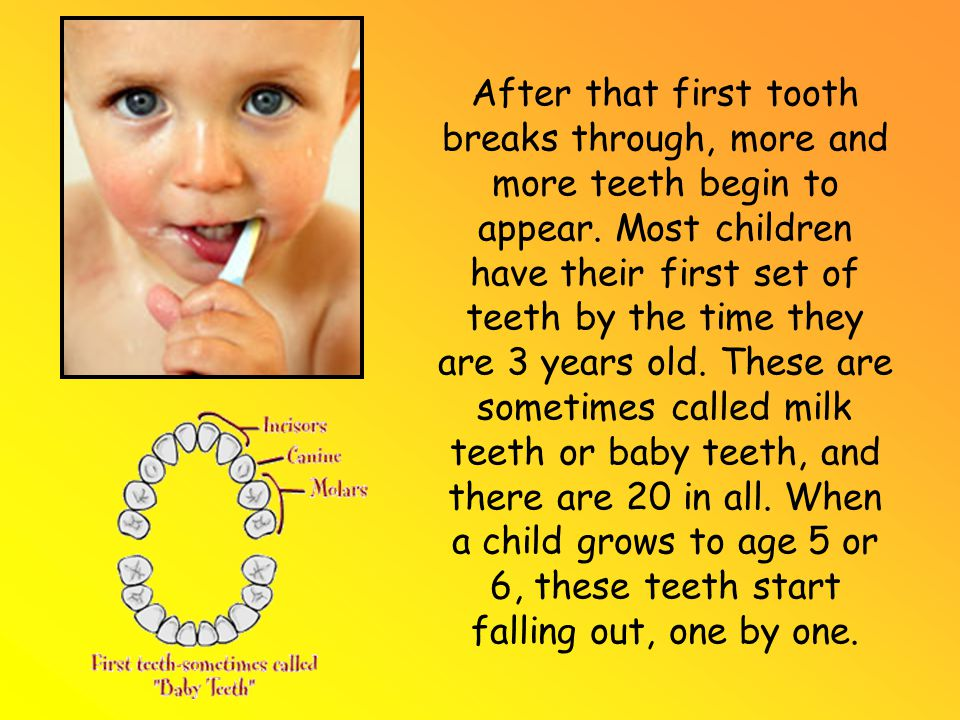 After that first tooth breaks through, more and more teeth begin to appear.