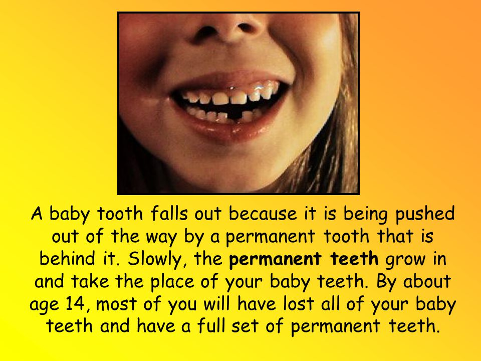 A baby tooth falls out because it is being pushed out of the way by a permanent tooth that is behind it.
