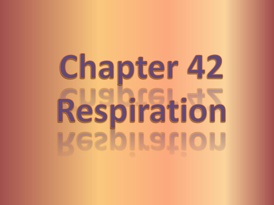 Chapter 42 Respiration