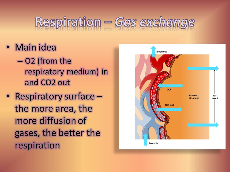 Respiration – Gas exchange