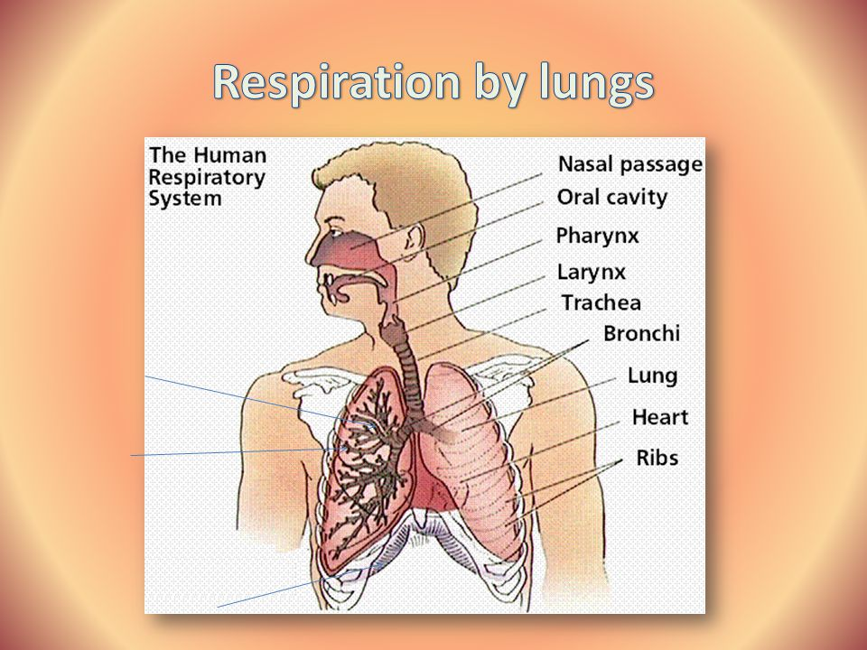 Respiration by lungs