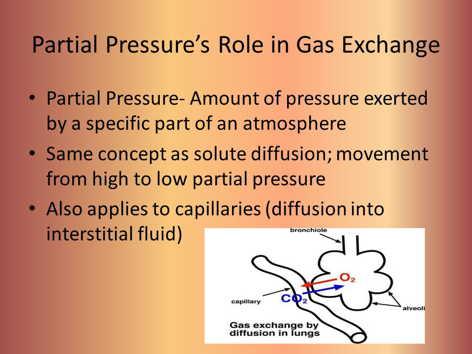 Partial Pressure's Role in Gas Exchange