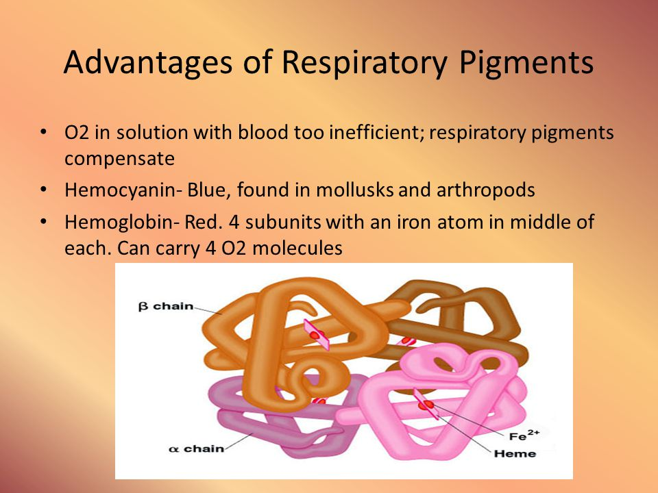 Advantages of Respiratory Pigments