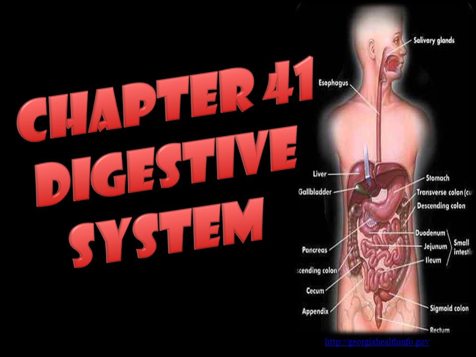 Chapter 41 Digestive System