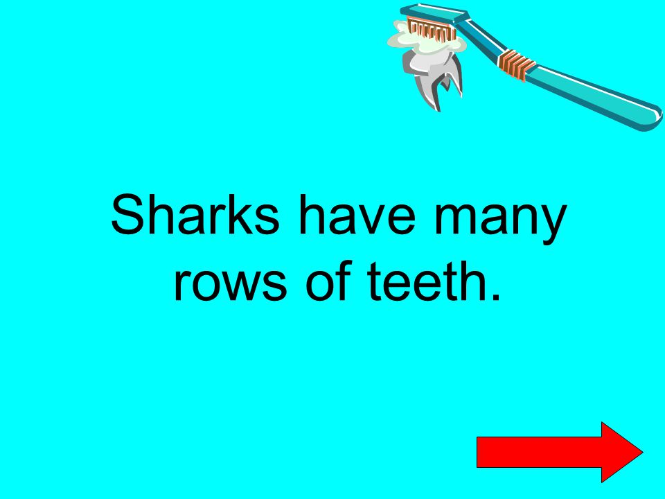 Sharks have many rows of teeth.
