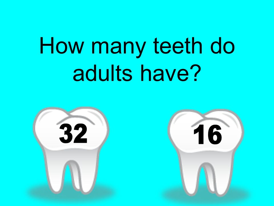 How many teeth do adults have
