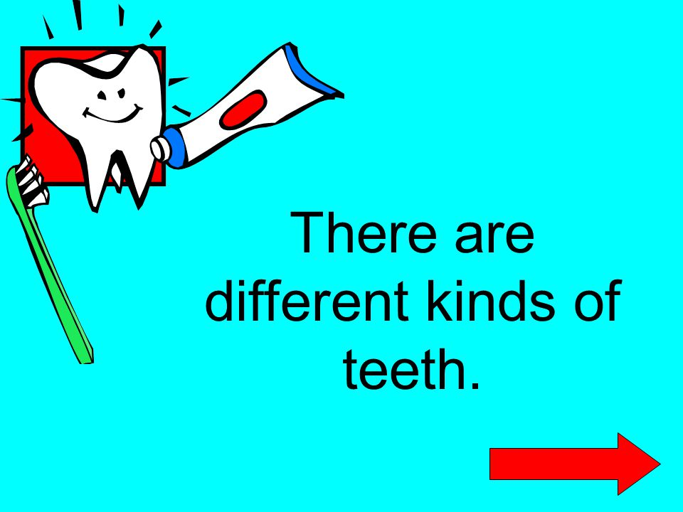 There are different kinds of teeth.