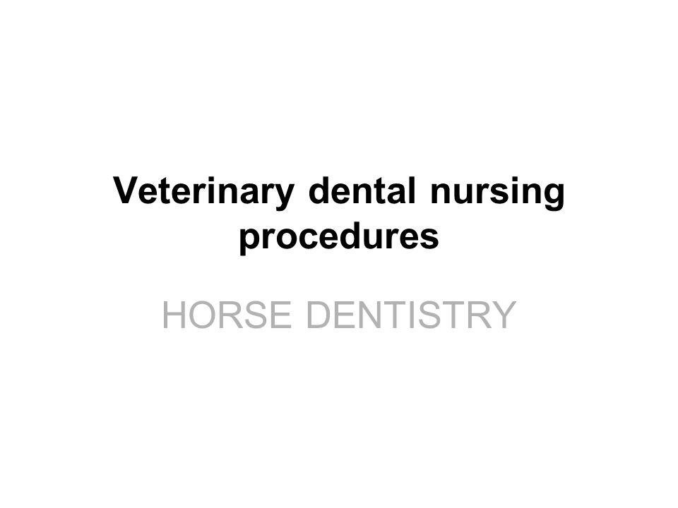 Veterinary dental nursing procedures