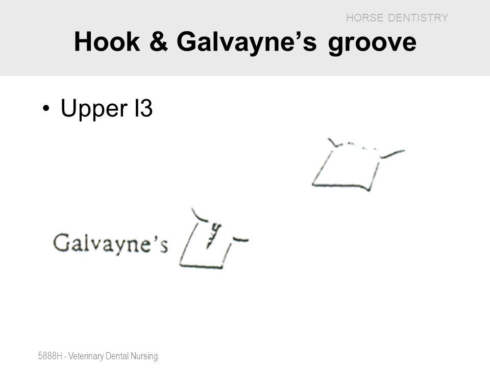 Hook & Galvayne's groove