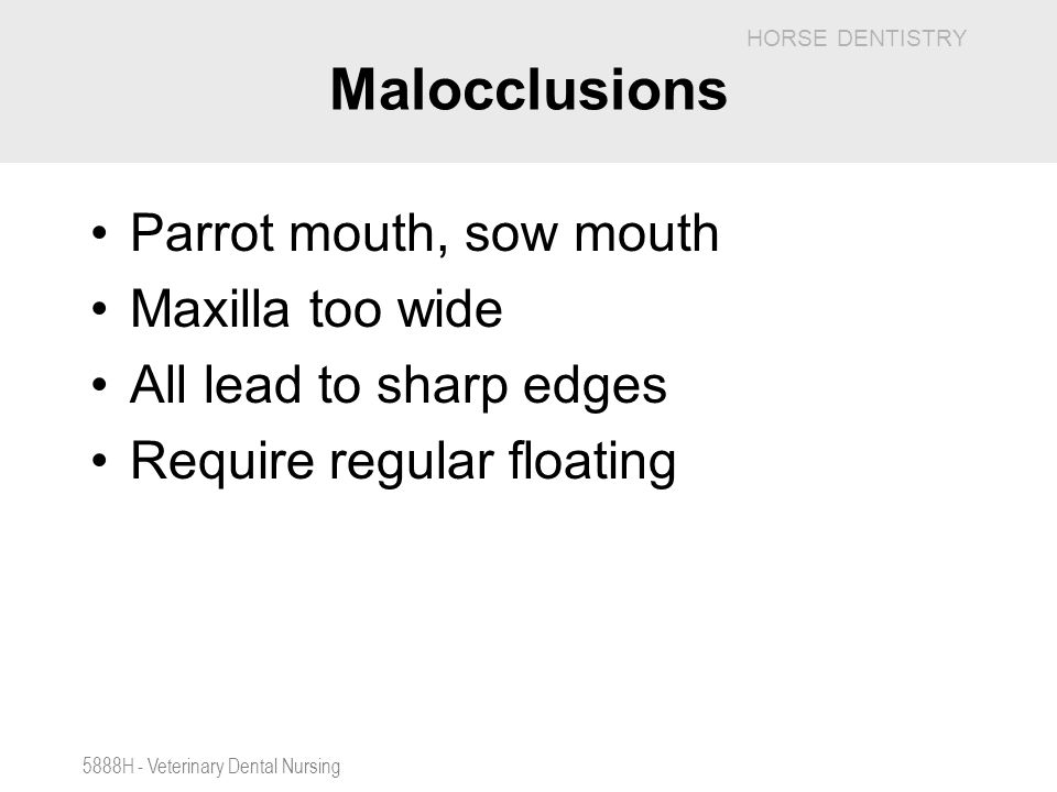Malocclusions Parrot mouth, sow mouth Maxilla too wide