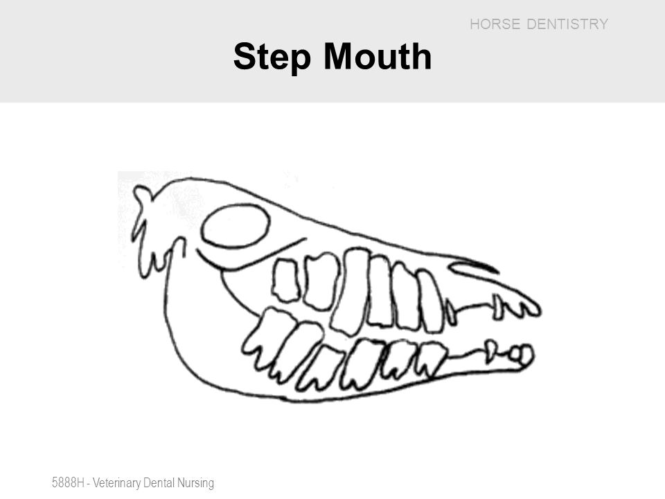 Step Mouth 5888H - Veterinary Dental Nursing