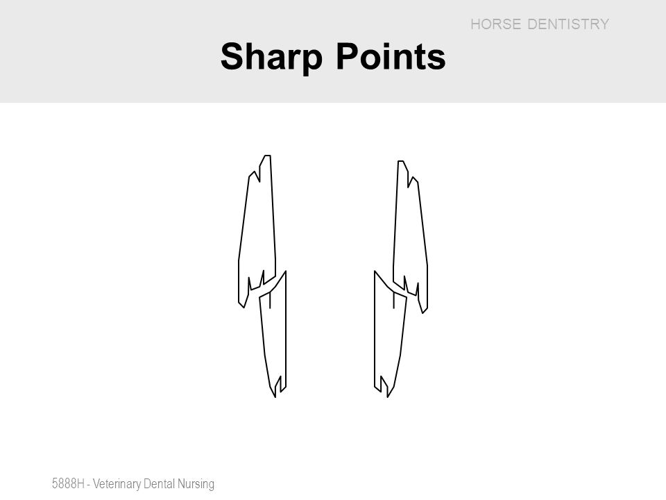 Sharp Points 5888H - Veterinary Dental Nursing