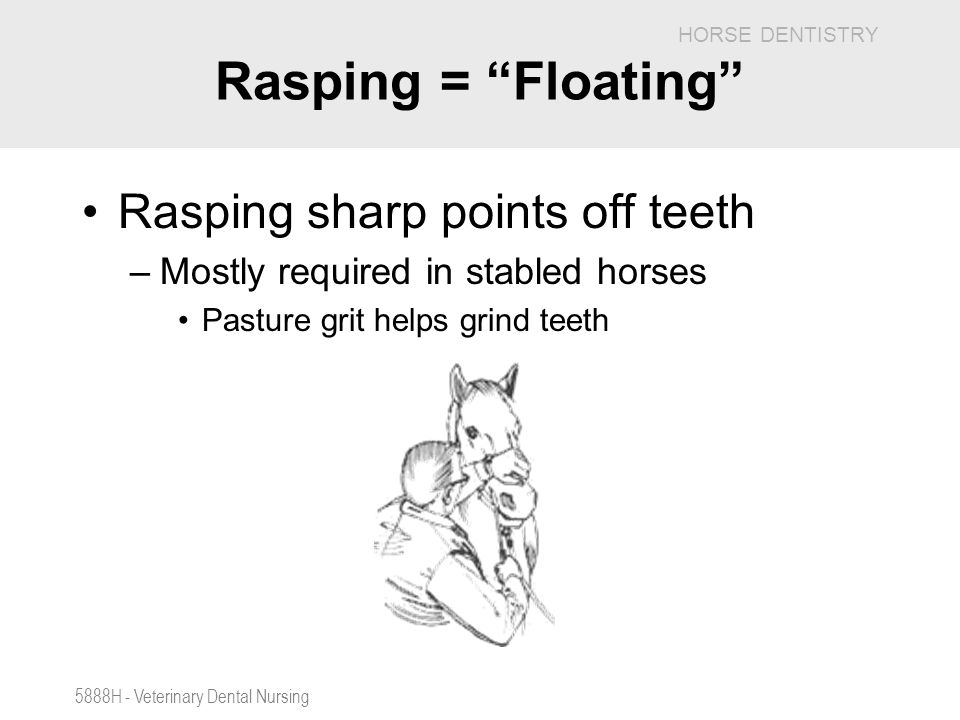 Rasping = Floating Rasping sharp points off teeth