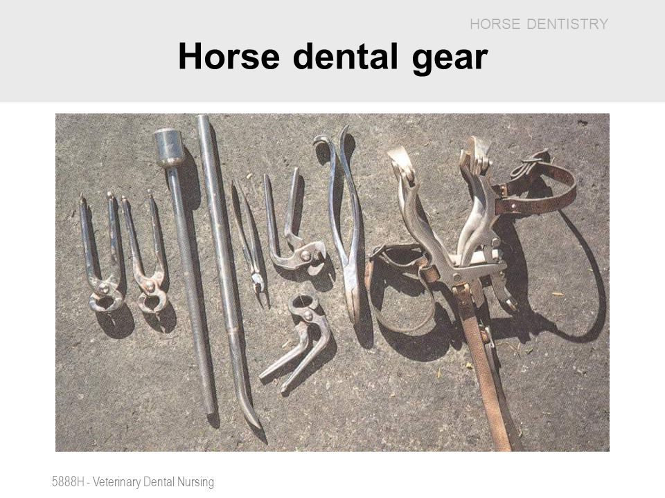 Horse dental gear 5888H - Veterinary Dental Nursing