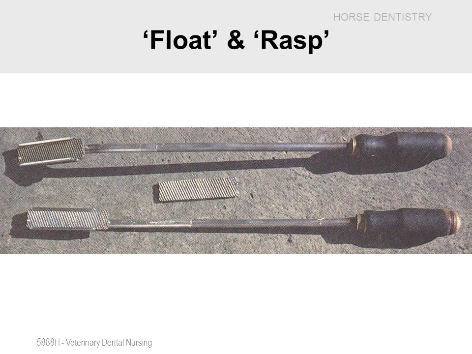 'Float' & 'Rasp' 5888H - Veterinary Dental Nursing