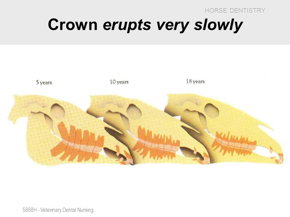 Crown erupts very slowly