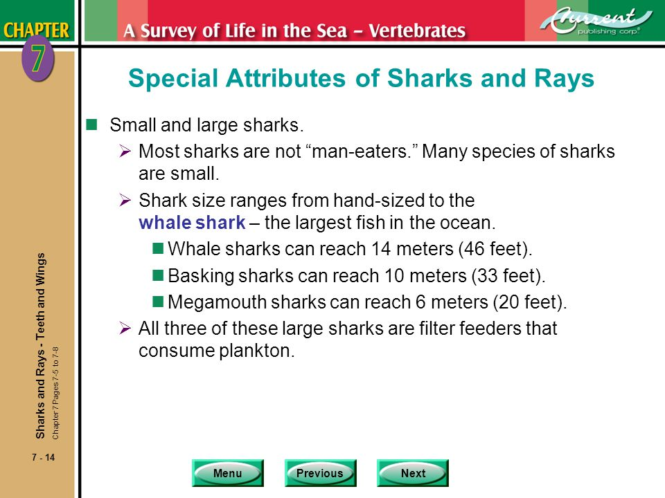 Special Attributes of Sharks and Rays