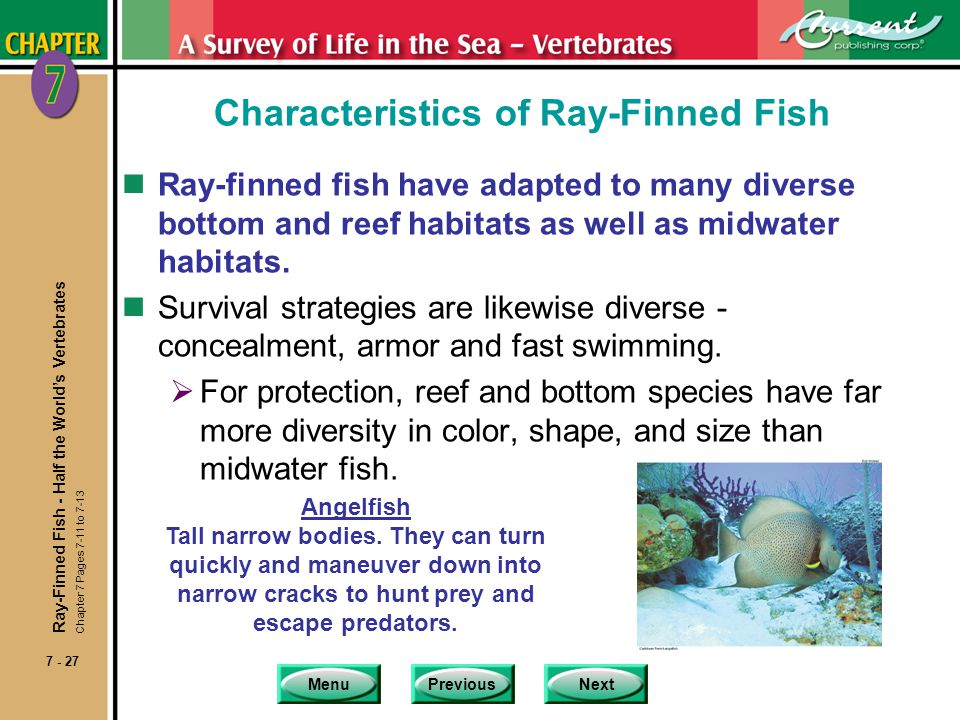 Characteristics of Ray-Finned Fish