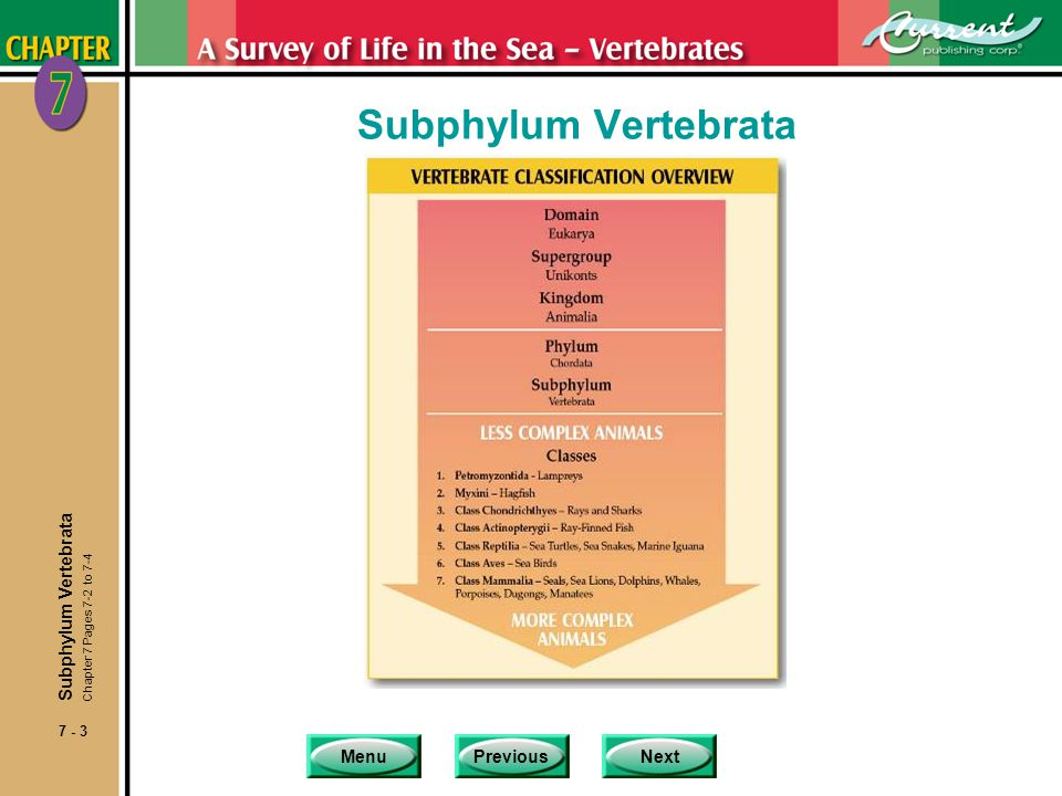 Subphylum Vertebrata Subphylum Vertebrata Chapter 7 Pages 7-2 to 7-4