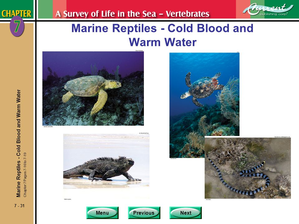 Marine Reptiles - Cold Blood and Warm Water