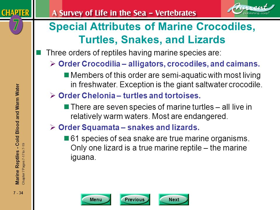 Special Attributes of Marine Crocodiles, Turtles, Snakes, and Lizards