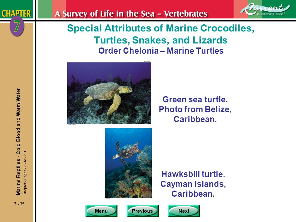Special Attributes of Marine Crocodiles, Turtles, Snakes, and Lizards Order Chelonia – Marine Turtles