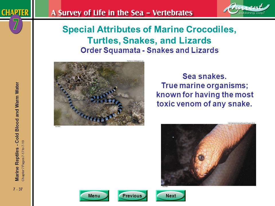 Special Attributes of Marine Crocodiles, Turtles, Snakes, and Lizards Order Squamata - Snakes and Lizards