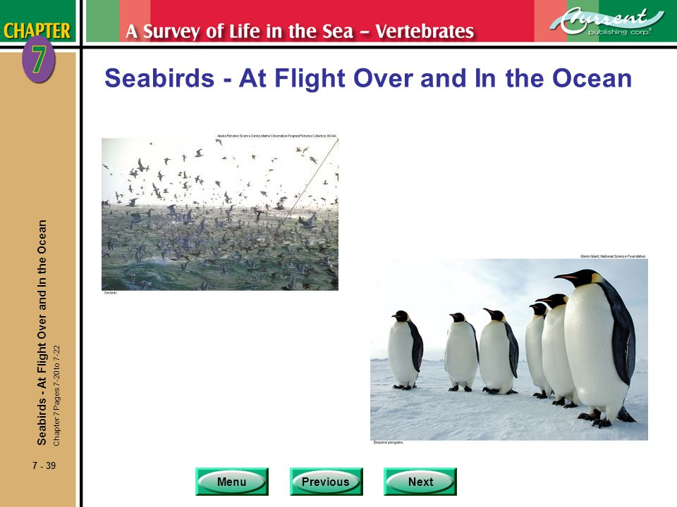 Seabirds - At Flight Over and In the Ocean
