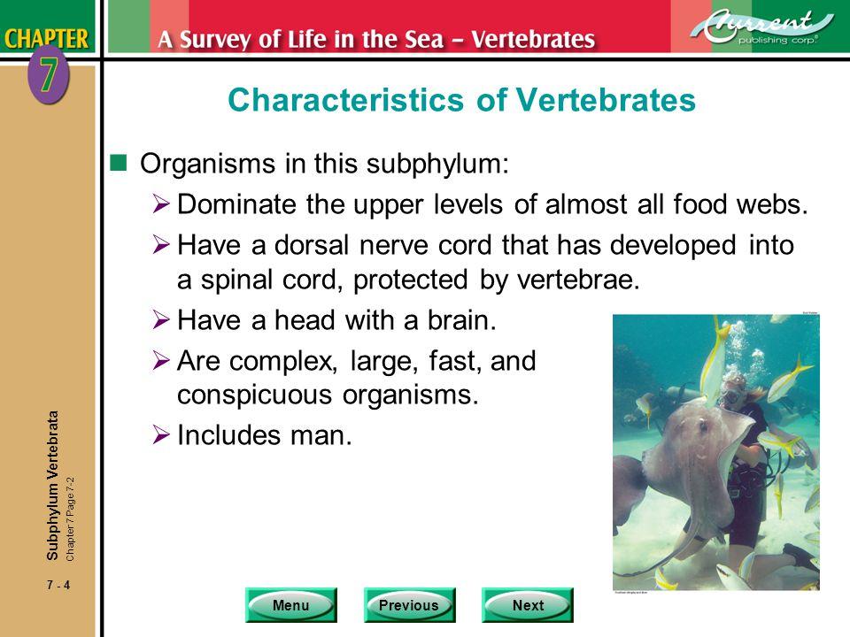 Characteristics of Vertebrates