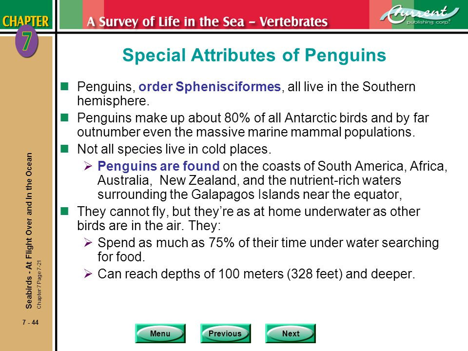 Special Attributes of Penguins