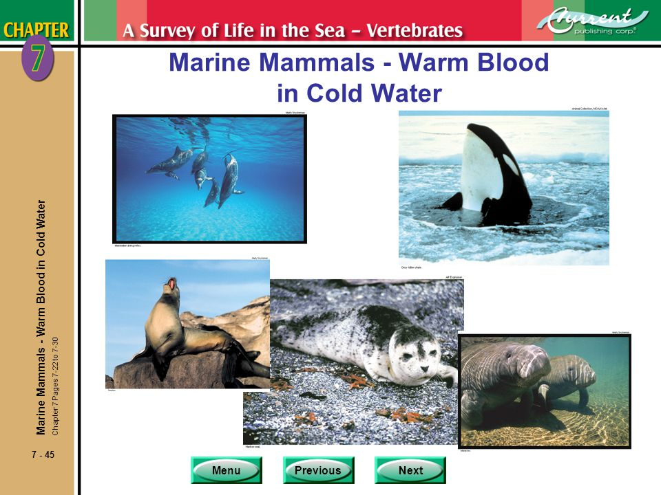 Marine Mammals - Warm Blood in Cold Water