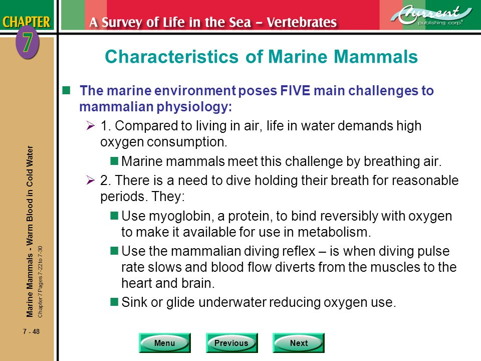 Characteristics of Marine Mammals