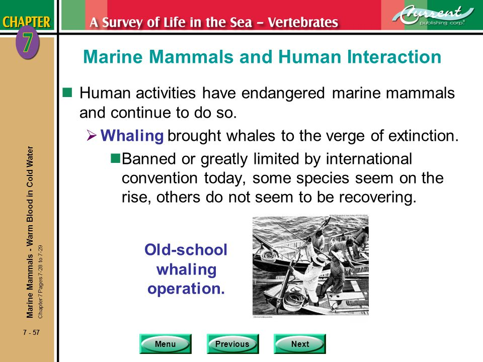 Marine Mammals and Human Interaction