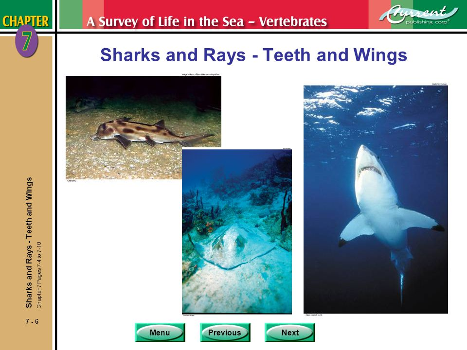 Sharks and Rays - Teeth and Wings