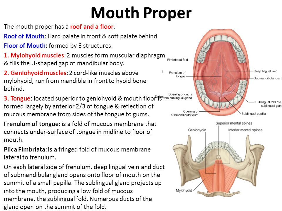 Mouth Proper