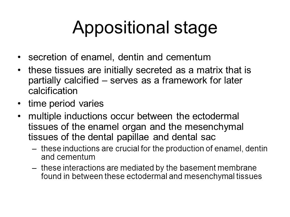 Appositional stage secretion of enamel, dentin and cementum