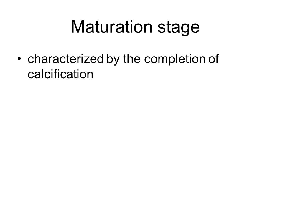 Maturation stage characterized by the completion of calcification