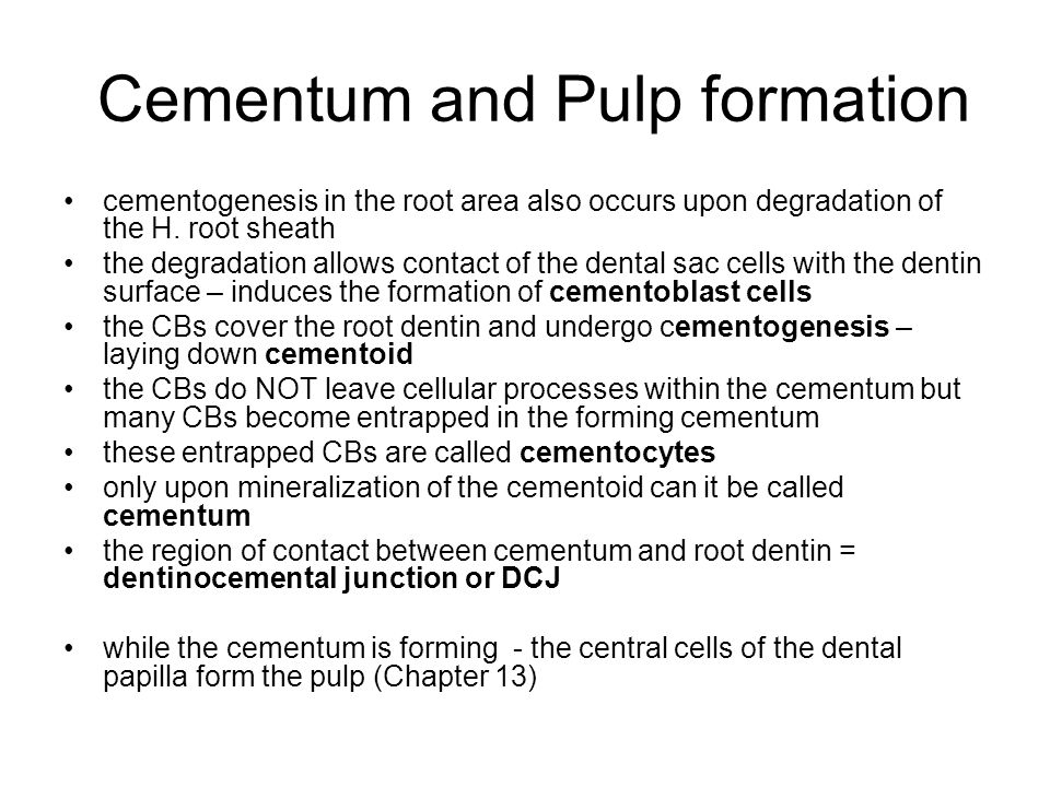 Cementum and Pulp formation