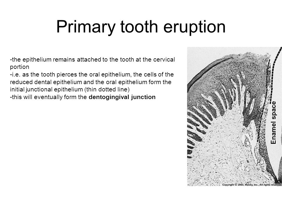 Primary tooth eruption