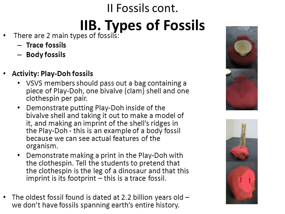 II Fossils cont. IIB. Types of Fossils