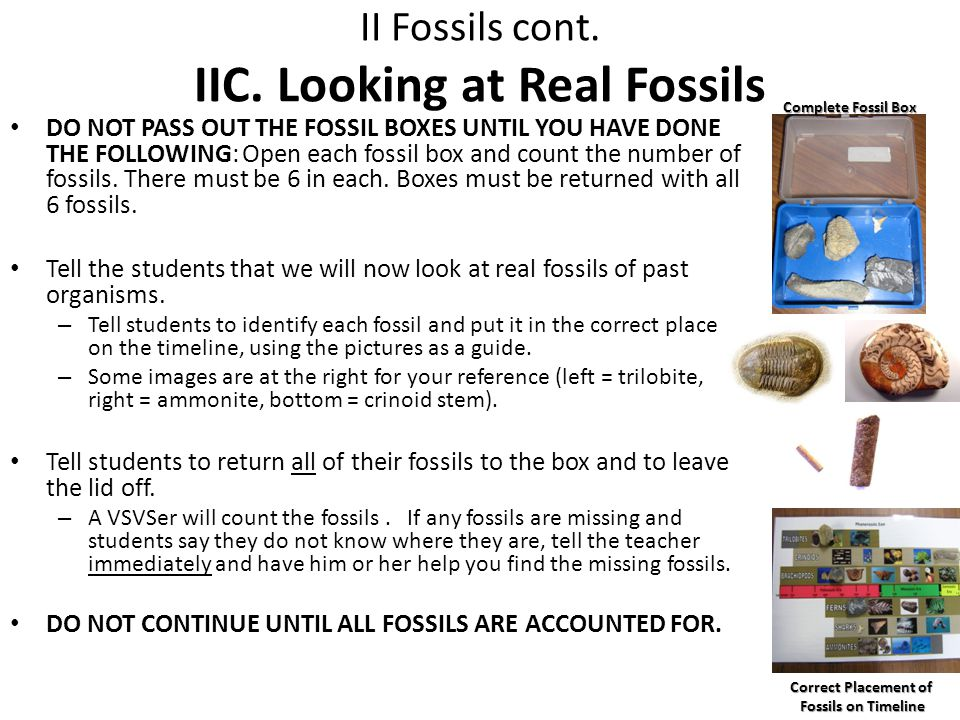 II Fossils cont. IIC. Looking at Real Fossils